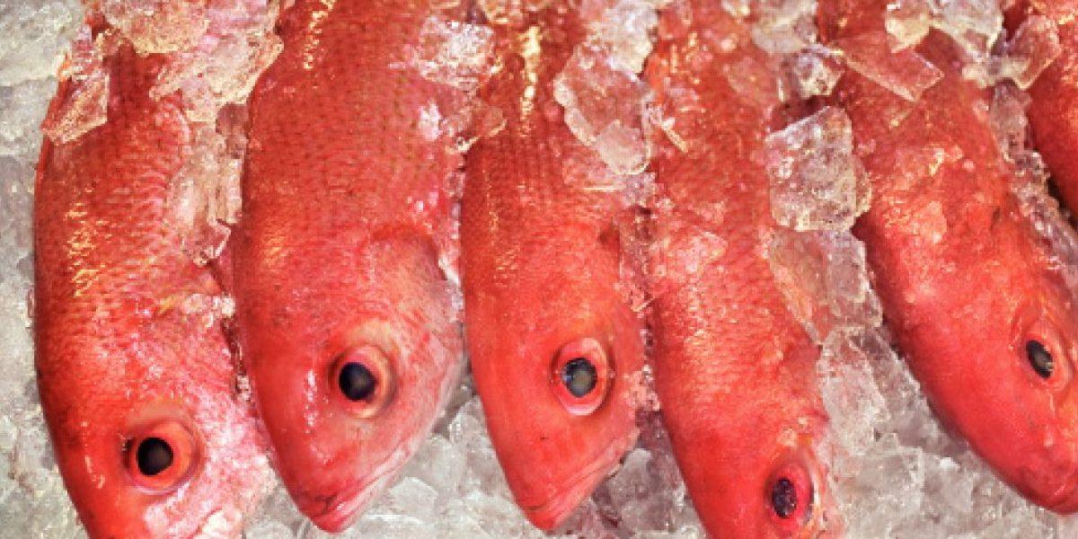 Área oeste mantiene primer lugar en venta y consumo de pescado
