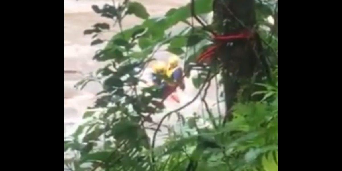Manejo de Emergencias logra rescatar persona en río en Ceiba