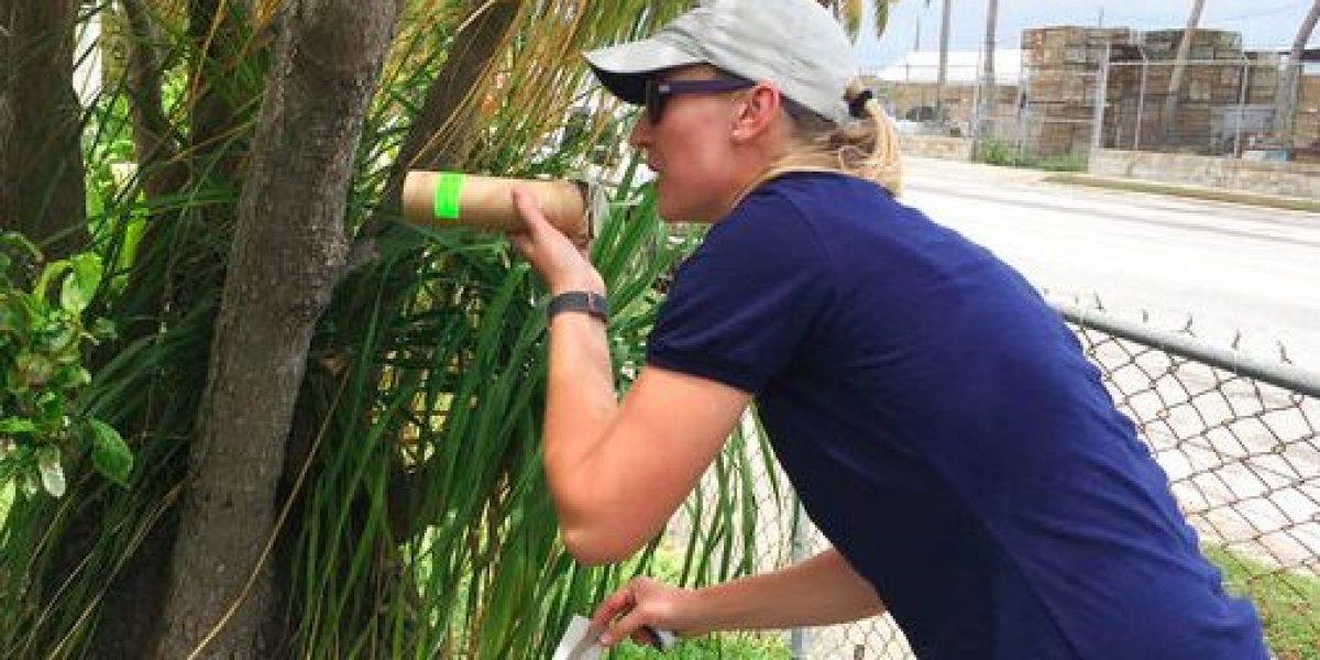 Inician pruebas con mosquitos transgénicos para el Zika