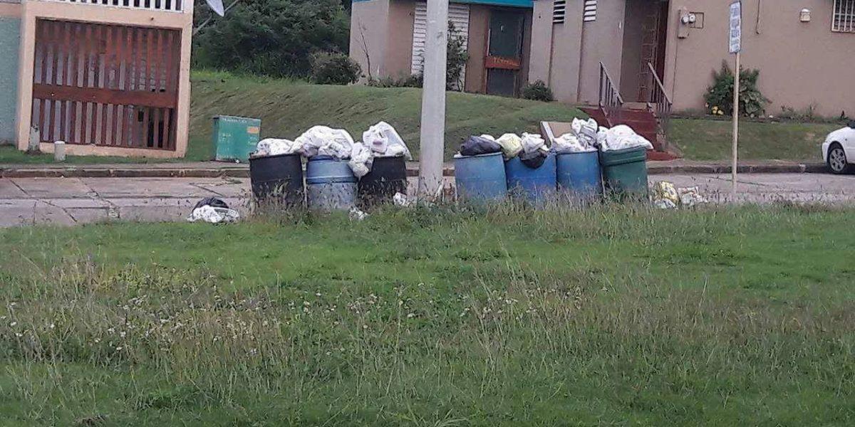 Critican paralización de recogido de basura en Arecibo