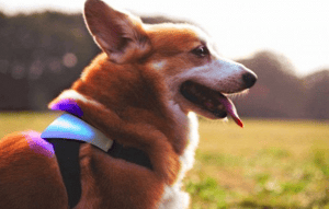 Con este collar sabrás lo que siente tu mascota