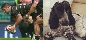 Causa caos perro que se comió el pasaporte de un jugador de rugby
