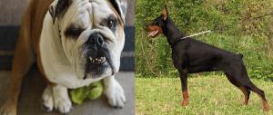 5 razas de perros que fueron creadas por el hombre