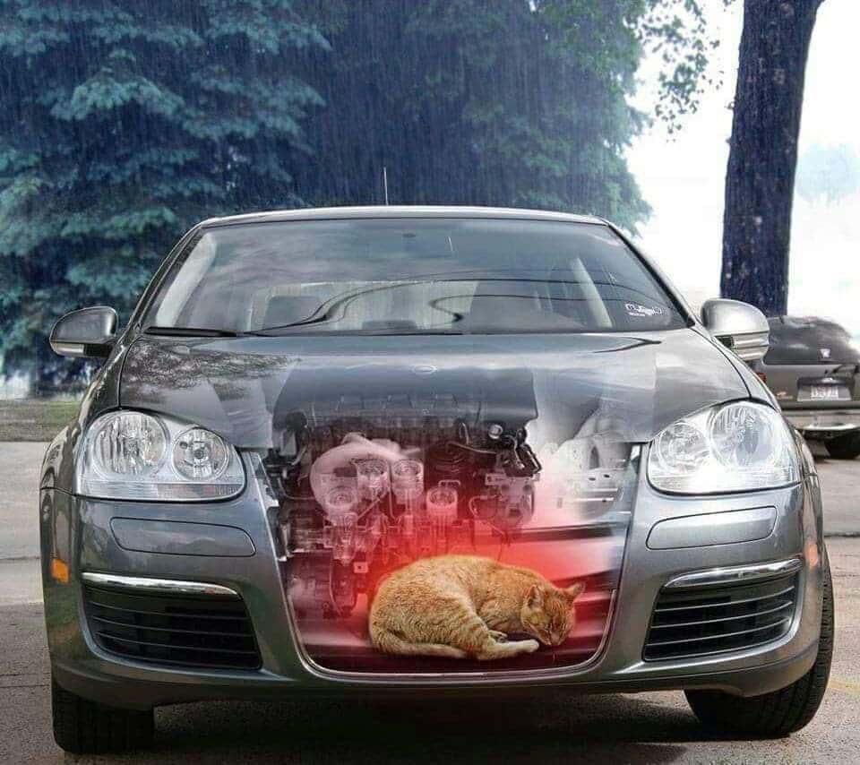 ¡Cuidado! Tu auto podría ser la guarida de animales cuando hace frío