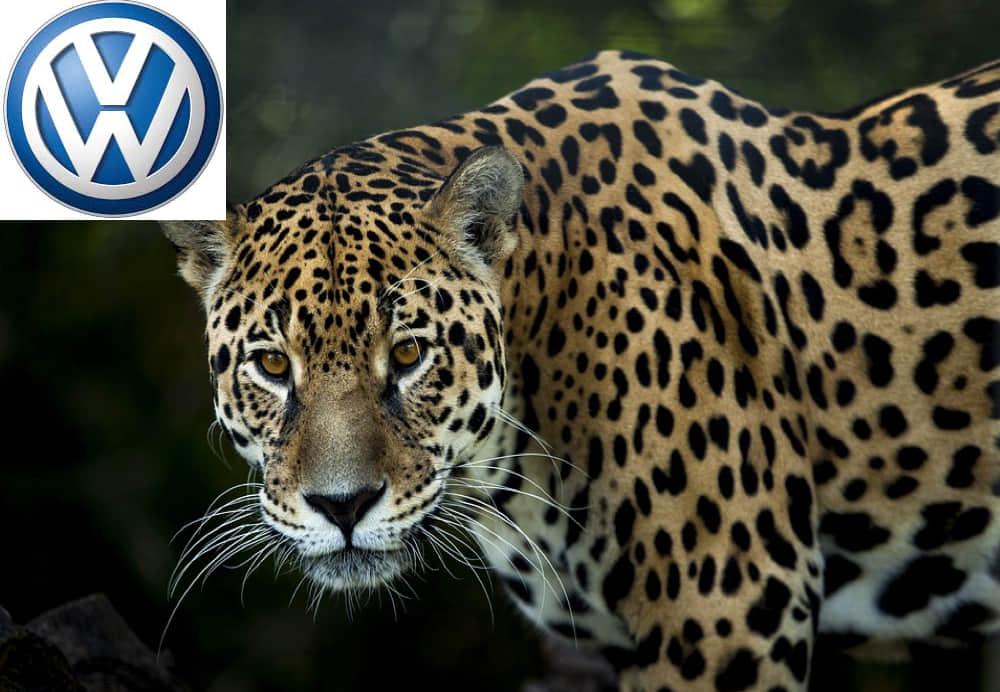 Volkswagen protege al jaguar mexicano en peligro de extinción