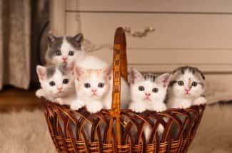 Abrazar gatitos, el trabajo más feliz y tierno que ya es una realidad